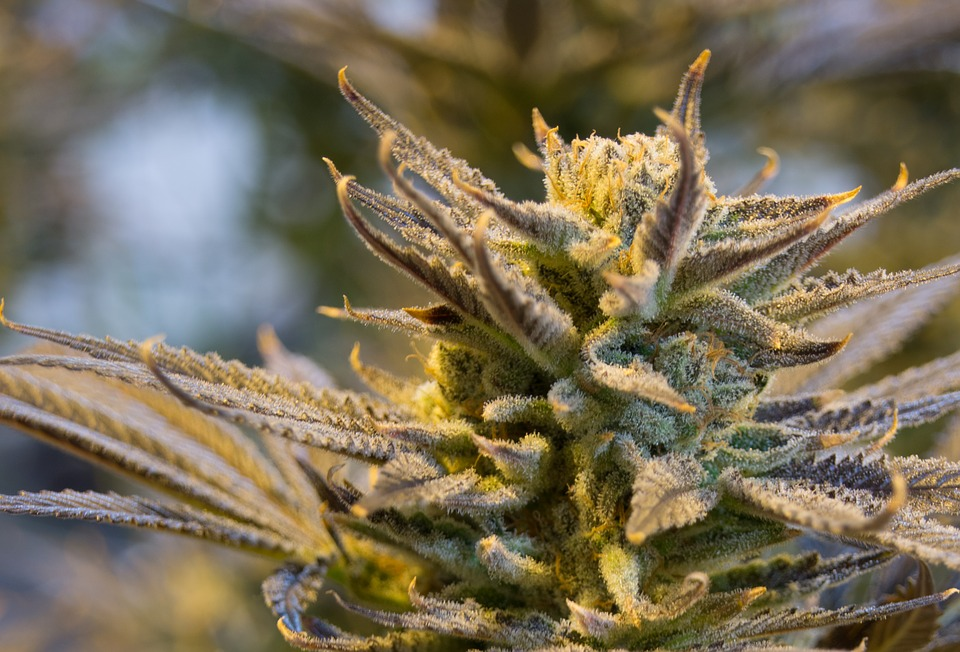 How to choose a strain