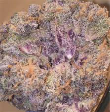 buy purple candy cane marijuana online